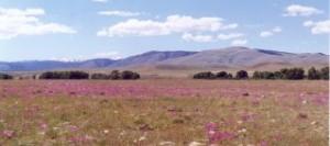 WyomingField_Blog