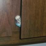 The Birdie in the Cupboard