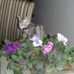 "Katrina ""Kat"" — New Member of the Household"
