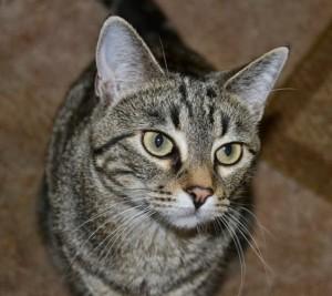 Katie-Cat-Says-Hi