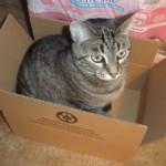 Katie Cat in a Box