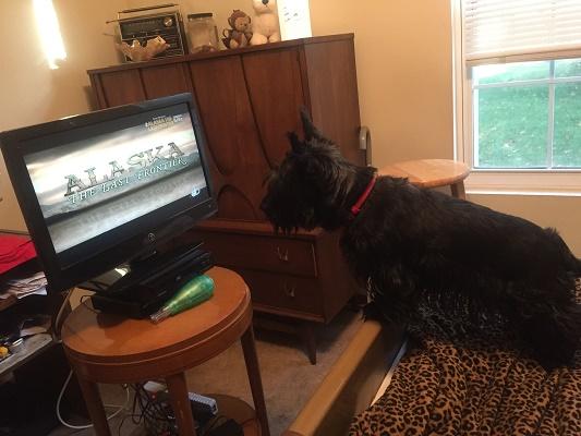 Sassy watching Bob's television