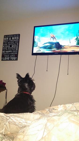 Sassy watching Lydia's television