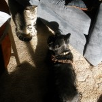 Sassy and Katie Share a Sunspot