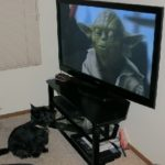 Sassy Loves Star Wars Movies