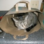 Stoltey Family Critter Updates